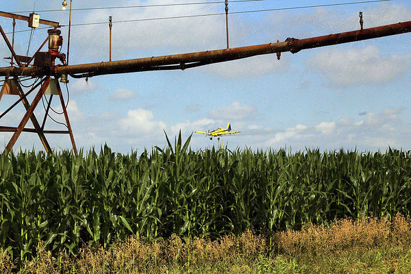 Roger Schneider | The Goshen News<br /> A pilot from AgriFlite Services of Wakarusa sprays a field of corn along C.R. 43 south of Benton Monday. The corn in the field was already head high as the growing season advances into the warmest months.