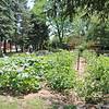 TERRAH HARMON | THE GOSHEN NEWS<br /> The Bethany Christian Schools garden is a part of their Farm to School Initiative.