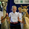 BEN MIKESELL | THE GOSHEN NEWS<br /> Libby Rayle of Avilla, 10, walks with her alpaca, Miss Latte, during the Alpaca Showmanship and Obstacle Show Wednesday morning at the Noble County Fairgrounds in Kendallville. Rayle competed with other first-time Alpaca Club members in the beginner class, while others competed in the intermediate and senior classes. Judge Megan Gingerich of New Paris focused on how well exhibitors maintained eye contact and poise while controlling their alpacas during the show.