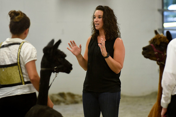 BEN MIKESELL | THE GOSHEN NEWS<br /> Judge Megan Gingerich of New Paris gives tips to the intermediate-class exhibitors during the Alpaca Showmanship and Obstacle Show Wednesday morning at the Noble County Fairgrounds in Kendallville.