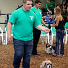 LIZ RIETH | THE GOSHEN NEWS Josiah Claar, 16, a champion from rabbit club, shows a dog at the Round Robin Showmanship Contest Thursday.
