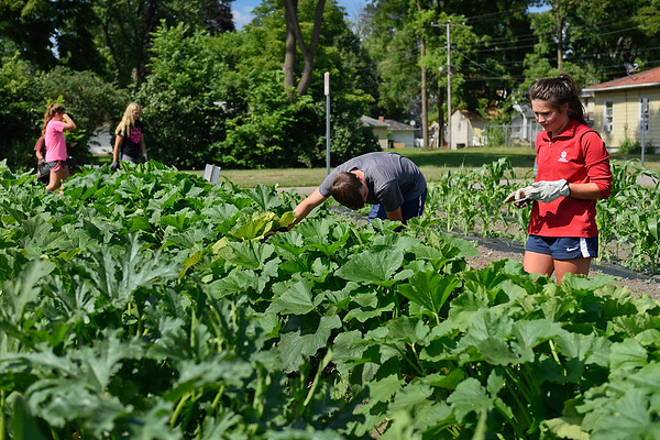 BEN MIKESELL | THE GOSHEN NEWS<br /> Volunteers sift through zucchini and squash plants looking for squash bugs Tuesday afternoon at Church Community Services in Elkhart.