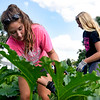 BEN MIKESELL | THE GOSHEN NEWS<br /> Caroline Mullet, 16, left, and Madi Miller, 16, Nappanee, search for squash bugs attached to zucchini and squash plants Tuesday at Church Community Services in Elkhart.