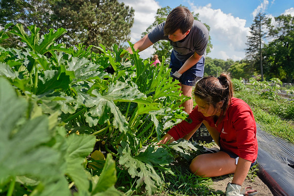 BEN MIKESELL | THE GOSHEN NEWS<br /> Will Bryant, 17, left, and Lauren Bryant, 16, Elkhart, search for squash bugs attached to zucchini and squash plants Tuesday at Church Community Services in Elkhart.