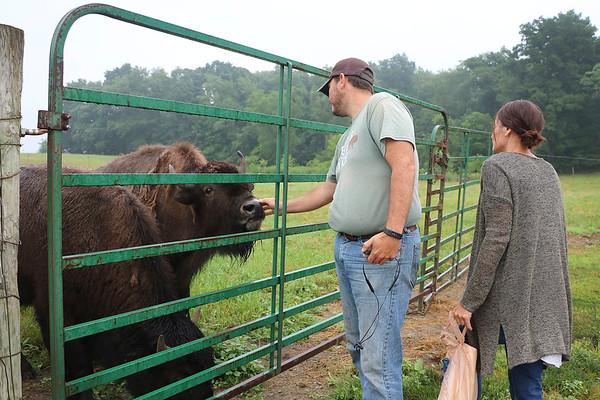 LIZ RIETH | THE GOSHEN NEWS <br /> Peter and Erica Cook, owners of Cook's Bison Ranch, feed bison Wednesday in Wolcottville.
