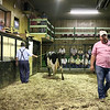 LIZ RIETH | THE GOSHEN NEWS <br /> Topeka Livestock Auction ower Rick Welsh runs the weekly auction Tuesday.