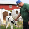 LIZ RIETH | THE GOSHEN NEWS Richard Thomas, owner of Leann Acres said calves are his favorite part about owning a dairy farm.