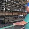 LIZ RIETH | THE GOSHEN NEWS Richard Thomas owns 120 cows at Leann Acres in Middlebury.
