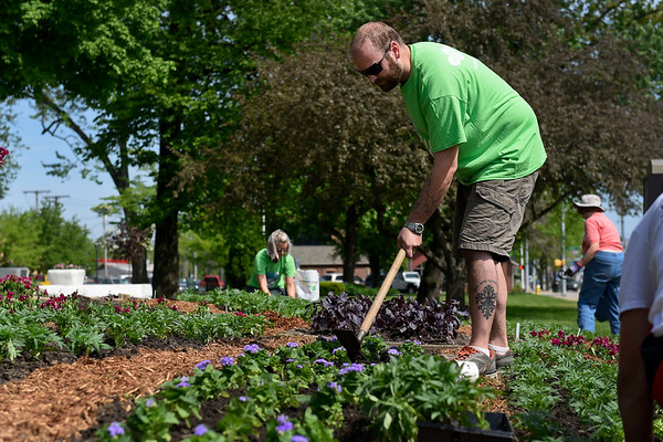 BEN MIKESELL | THE GOSHEN NEWS<br /> Interra Credit Union employee Jason Mills, from Bristol, works on planting ageratum flowers at the quilt garden installment Thursday morning on the lawn of the Elkhart County Courthouse. Four Interra employees volunteered to help plant about 670 square feet of flowers for this year's quilt garden at the Courthouse.