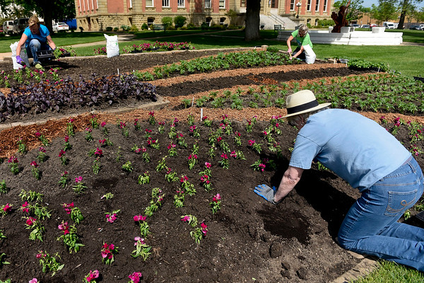 BEN MIKESELL   THE GOSHEN NEWS<br /> Ellen Straw with the Goshen Historical Society plants snapdragons Thursday morning for the quilt garden installment outside of the Elkhart County Courthouse.