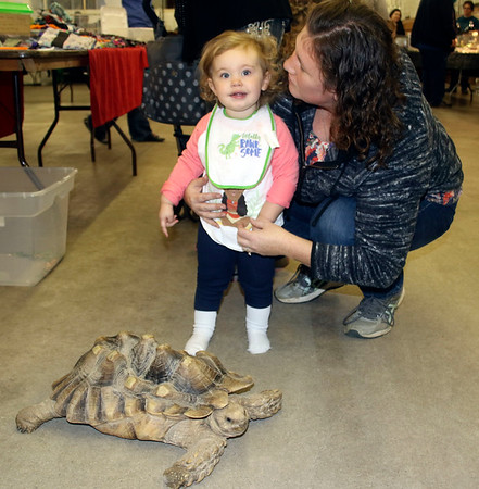 AIMEE AMBROSE | THE GOSHEN NEWS <br /> Evie Hagan and her mother Chelsey Hagan, South Bend, check out a rescued sulcata tortoise during the monthly reptile expo at the Elkhart County Fairgrounds on Saturday.