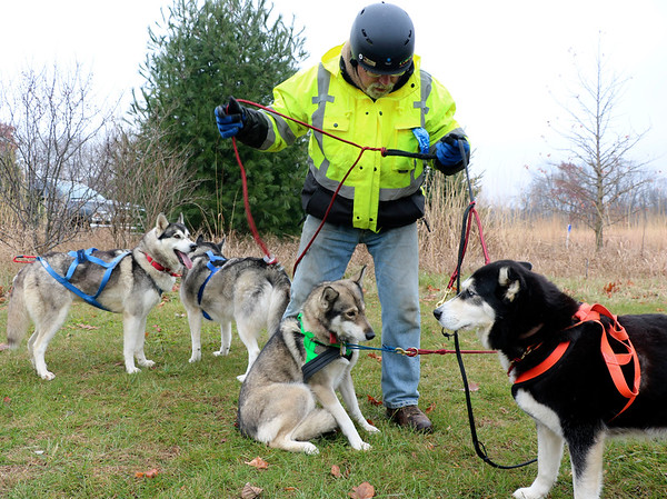 JOHN KLINE | THE GOSHEN NEWS<br /> Jan Bloom, a mushing enthusiast from Paw Paw, Michigan, gets his team of Siberian Huskies into their harnesses during a Mushing 101 class held at River Preserve County Park Saturday afternoon.