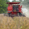BEN MIKESELL | THE GOSHEN NEWS<br /> Charles Martin, Goshen, uses a combine to harvest soybeans Wednesday afternoon on a field near C.R. 38 and 19 in Goshen.