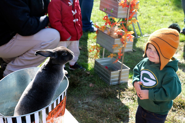 AIMEE AMBROSE | THE GOSHEN NEWS <br /> A curious bunny checks out Bryson O'Connell, 2, Syracuse at a small petting zoo during the Syracuse Fall Harvest Festival at Lakeside Park on Saturday.