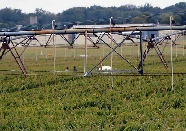 AIMEE AMBROSE | THE GOSHEN NEWS From C.R. 31, the fuselage and tail of a small plane can be seen poking from a corn field. The FAA is investigating what caused the pilot to land the plane in the field Wednesday evening. Four people were on board, and nobody was injured.