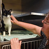 BEN MIKESELL | THE GOSHEN NEWS<br /> Executive assistant Janet Graham pets Josephine, a cat housed at the Humane Society of Elkhart County Thursday afternoon. Josephine is one of 250 cats crowding the shelter.