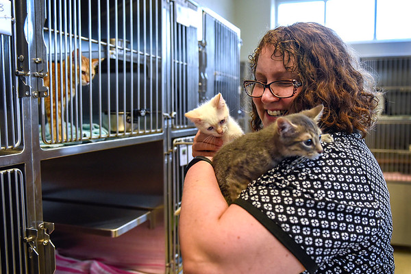 BEN MIKESELL | THE GOSHEN NEWS<br /> Executive assistant Janet Graham handles two kittens outside of their pens Thursday afternoon at the Humane Society of Elkhart County in Bristol. There are currently around 250 felines housed at the shelter, which is well over capacity. The Humane Society will normally bring in nearly 500 animals this time of year, but that number is more than 600 now, Graham said.