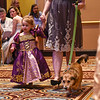 BEN MIKESELL | THE GOSHEN NEWS<br /> Sawyer Stutsman, 2, Elkhart, walks with her mother Paige as their dog Tory is introduced during the Humane Society of Elkhart County's Best in Show fundraiser Thursday night at the Lerner Theatre.