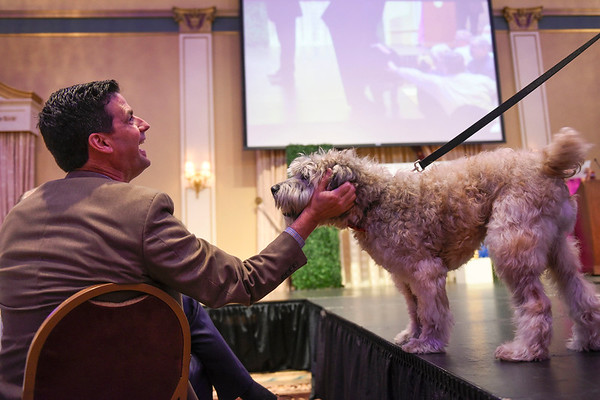 BEN MIKESELL | THE GOSHEN NEWS<br /> Kip Ellis, of Middlebury, is greeted by Tanner, a 12-year-old Wheaten terrier owned by Jeff and Melissa Rodino, during the Humane Society of Elkhart County's Best in Show fundraiser Thursday night at the Lerner Theatre.