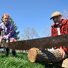 BEN MIKESELL | THE GOSHEN NEWS<br /> Selah Potsander, 11, Goshen, saws a log with her brother Solomon, 8, as Larry Yoder keeps the saw and log steady during the Arbor Day Celebration Friday evening at Shanklin Park.