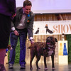 BEN MIKESELL | THE GOSHEN NEWS<br /> Pauly, a 6-year-old shepherd mix, right, stands on stage with his brother Bentley, and owners Brad and Allie Canniff during the Humane Society of Elkhart County's Best in Show fundraiser Thursday night at the Lerner Theatre.
