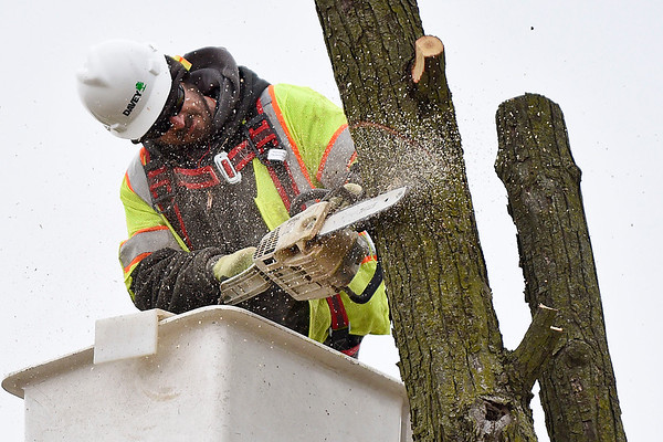 BEN MIKESELL | THE GOSHEN NEWS Dan Sutton, Plymouth, with Davey Tree Expert Company, cuts down a tree Tuesday morning along Kercher Road, near the intersection of U.S. 33 in Goshen. This tree needed to be removed in order to continue planned expansions of Kercher Road.
