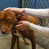 BEN MIKESELL | THE GOSHEN NEWS<br /> Volunteer Andrea Muir pets Red, a dog who has been at New Hope Animal Rescue for more than a year. Red is one of two dogs currently at the shelter in Syracuse.