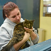 BEN MIKESELL | THE GOSHEN NEWS<br /> Volunteer Chloe Ciriello, a freshman at Wawasee High School, holds a cat during adoption hours Thursday evening at New Hope Animal Rescue in Syracuse.