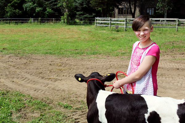 CAMDEN CHAFFEE | THE GOSHEN NEWS<br /> Zoey Edminston walks her cow Big Mac into the pasture Tuesday.