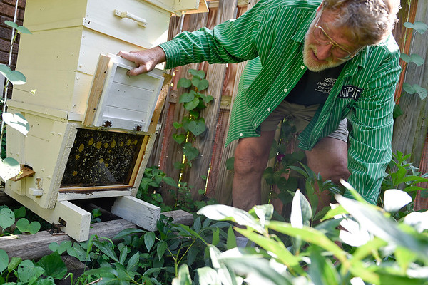 BEN MIKESELL | THE GOSHEN NEWS<br /> Tom Hassan, of Goshen, made his own top bar bee hive in his backyard where he houses his Italian bees. On Monday, a swarm left with a new queen to find a suitable home.