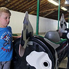 CAMDEN CHAFFEE | THE GOSHEN NEWS <br /> Nathan Roberts looks at a cow-themed fair ride being prepared Tuesday for the LaGrange County 4-H Fair.