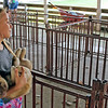 CAMDEN CHAFFEE | THE GOSHEN NEWS<br /> Danica Shook holds her puppy in the swine barn during fair set-up Tuesday at the LaGrange County 4-H fairgrounds.