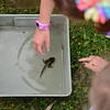 BEN MIKESELL | THE GOSHEN NEWS<br /> Second- and third-graders check out a bullfrog tadpole found in the muck Thursday afternoon during Bright Time Summer Camp at Bethany Christian Schools.