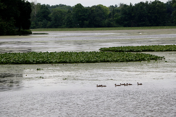 JOHN KLINE | THE GOSHEN NEWS<br /> Ducks make their way across the Goshen Dam Pond Monday afternoon. Goshen Board of Public Works and Safety members Monday authorized the funding of a $37,000 study aimed at exploring the potential use of the Goshen Dam Pond for flood control.