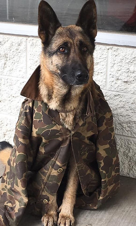 A photo from Ashley Hochstetler's GoFundMe page shows the German shepherd Honeydew, a companion of Henry Wrightsman Jr. of Wakarusa. The two died as a result of a two-vehicle crash on Ind. 19 Tuesday. The GoFundMe campaign sought to raise funds to help pay funeral expenses.