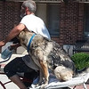 A photo from Ashley Hochstetler's GoFundMe page shows Henry Wrightsman Jr. of Wakarusa ride a bicycle with his German shepherd companion, Honeydew. The two died as a result of a two-vehicle crash on Ind. 19 Tuesday. The GoFundMe campaign sought to raise funds to help pay funeral expenses.