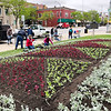 "SUSIE NEFF | CONTRIBUTED<br /> Volunteers plant thousands of plants into a quilt garden at the Elkhart County Courthouse lawn in Goshen Monday. The quilt garden is called ""The Wild Blue Yonder and is based on the ""Flying Geese"" quilt pattern. The plants are coleus, Dusty Miller and petunias."
