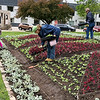 "SUSIE NEFF | CONTRIBUTED<br /> Volunteers Annette Webb, left, and Phil Straw plant thousands of plants into a quilt garden at the Elkhart County Courthouse lawn in Goshen Monday. The quilt garden is called ""The Wild Blue Yonder and is based on the ""Flying Geese"" quilt pattern. The plants are coleus, Dusty Miller and petunias."