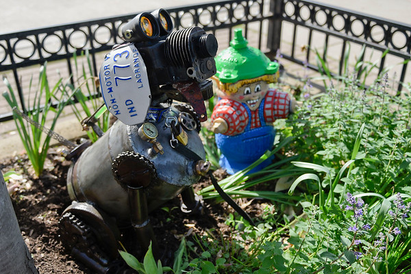BEN MIKESELL | THE GOSHEN NEWS<br /> A dog sculpture, named Otis by designer Brian Van Voorst, is installed in a flower bed Wednesday along Main Street in Nappanee.