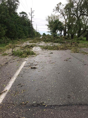 NIPSCO | CONTRIBUTED<br /> Trees were knocked down onto C.R. 26 in Goshen west of Ind. 15 early Thursday morning.