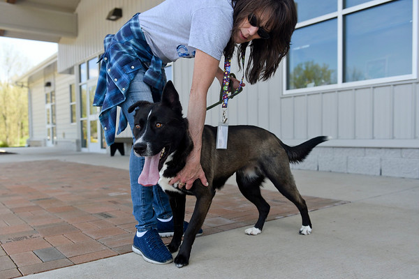BEN MIKESELL | THE GOSHEN NEWS<br /> Volunteer Kristy Sipress returns from a walk with Jinx Tuesday afternoon at the Humane Society of Elkhart County.