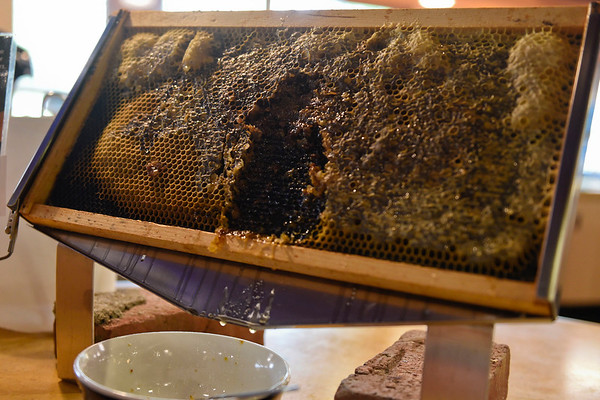 BEN MIKESELL | THE GOSHEN NEWS<br /> For Pollinator Day, Goshen College resident director Jeremy Corson prepared a slate of honey made by bees at Goshen College.