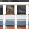 A bear sits in the window at 613 S. Eighth St. for the Bear Parade in Goshen Monday morning. Residents in the community are putting bears in their windows to give walkers something to look for while exercising during the stay at home quarantine period.