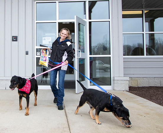 Twyla Johnson, of Bristol, walks out of the Humane Society of Elkhart County after she adopted two senior Rottweiler mix dogs Tuesday afternoon.