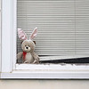 A bear sits in the window at 605 S. 7th. St., Goshen for the Bear Parade in Goshen Monday morning. Residents in the community are putting bears in their windows to give walkers something to look for while exercising during the stay at home quarantine period.