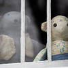 A pair of bear sit in the window at 634 S. 7th. St., Goshen  for the Bear Parade in Goshen Monday morning. Residents in the community are putting bears in their windows to give walkers something to look for while exercising during the stay at home quarantine period.