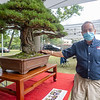 Bonsai Artist William Valavanis showcases his R.A.F. Dwarf Scots Pine Saturday, Aug. 1 at Wellfield Botanic Gardens during the Bonsai Show in Elkhart. The tree is over 35 years old.