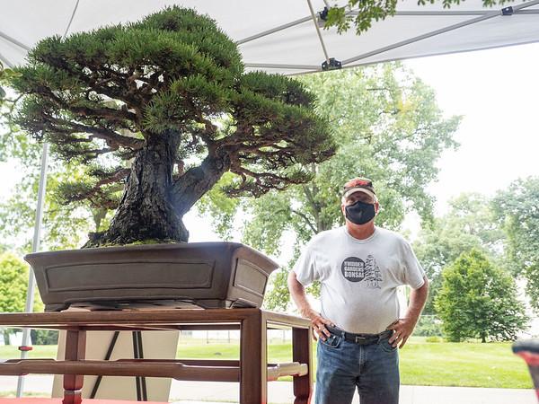 Mark Karczewski looks a R.A.F. Dwarf Scots Pine  Saturday, Aug. 1 at Wellfield Botanic Gardens during the Bonsai Show in Elkhart.