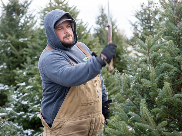 Stanger Group forman David Roe uses a shearing knife to trim a fir tree Tuesday morning at a farm near Wolcottville. The Stanger family will offer Christmas trees to those who need one for donations, or even free, the next two Saturdays at their Goshen location.