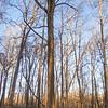 Trees glisten in the golden sunlight Tuesday evening along the trail near the Goshen Dam in Goshen.